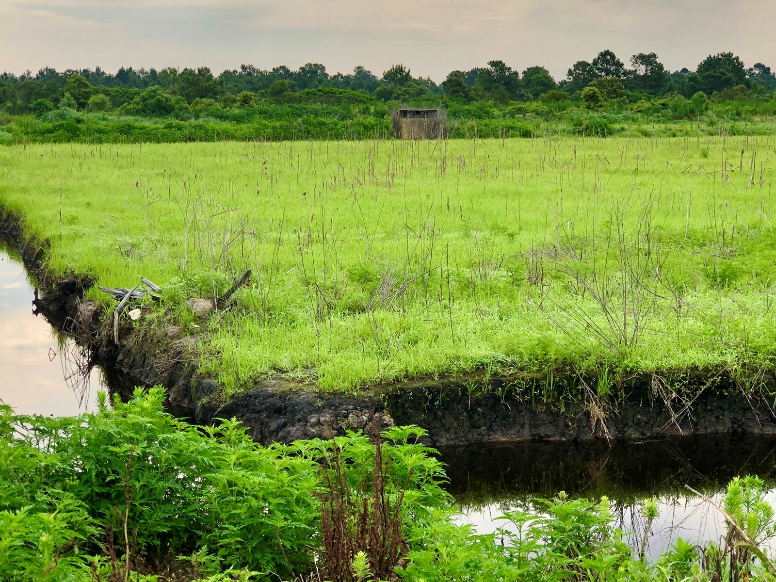 Duck Impoundment for sale in Hyde County, NC