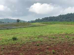 .8 ACRES UNRESTRICTED LAND IN ROGERSVILLE, TN FOR SALE
