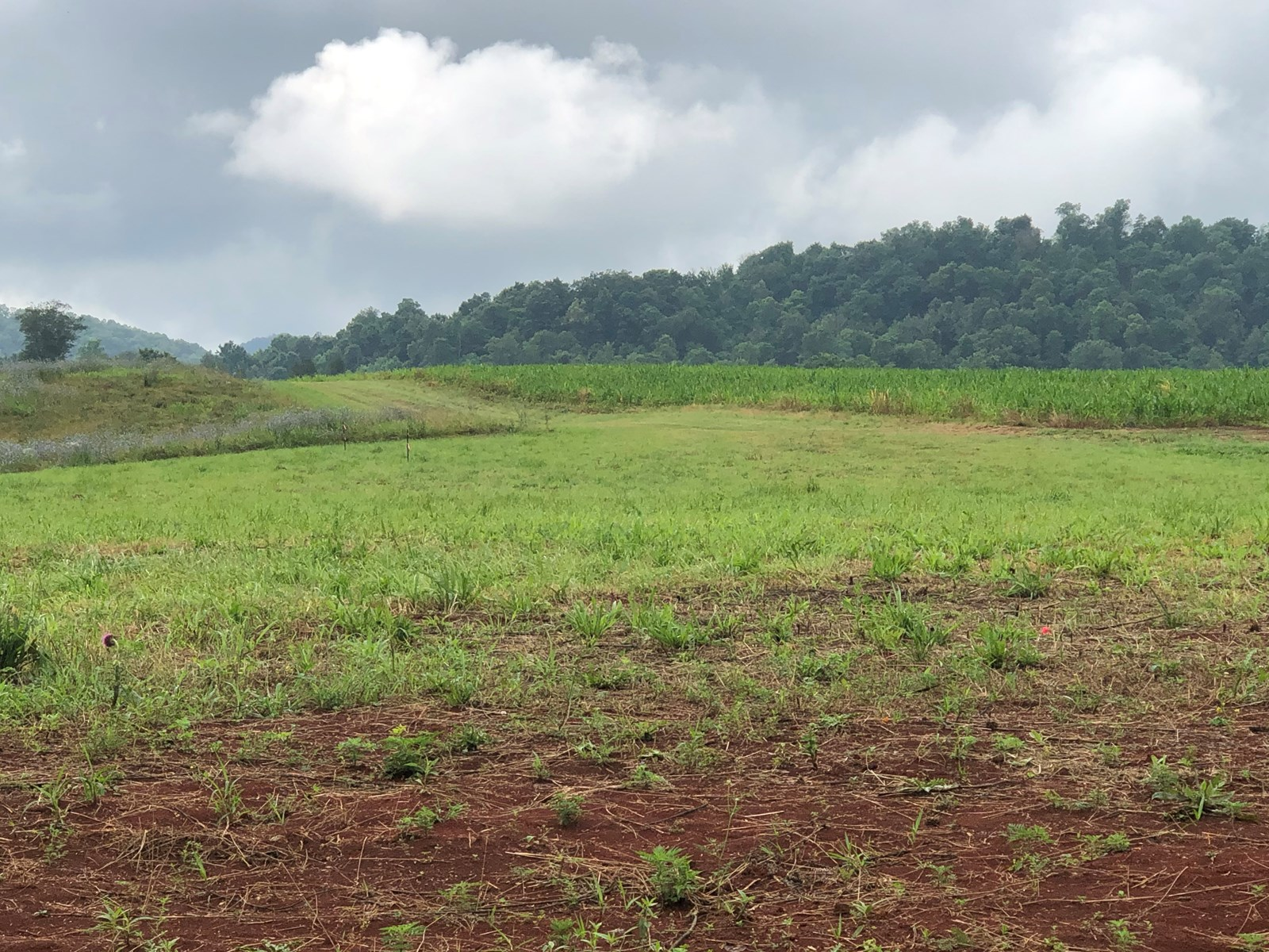 .78 Acres Unrestricted Land in Rogersville, Tn For Sale