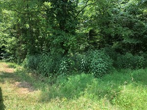 ACREAGE IN THE MOUNTAINS OF EAST TENNESSEE FOR SALE.