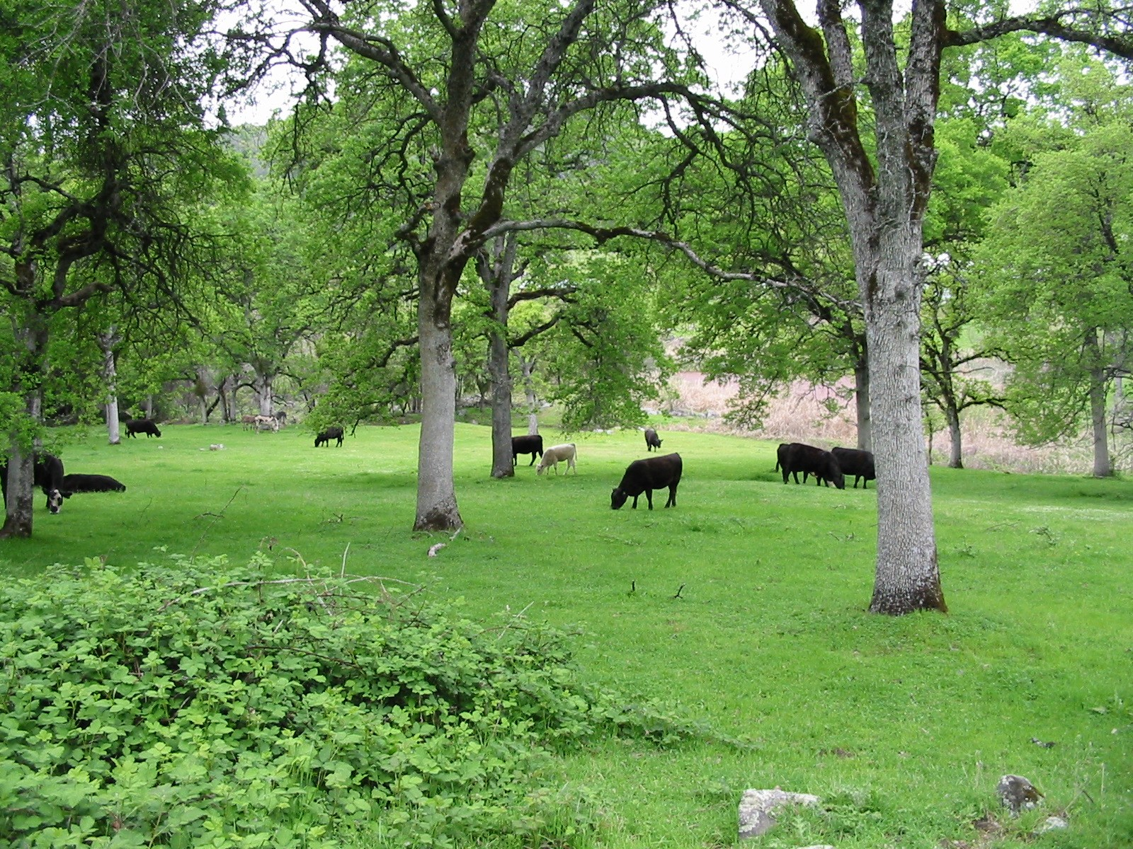 50+ Acre Cattle and Horse Ranch For Sale, Grass Valley, Ca