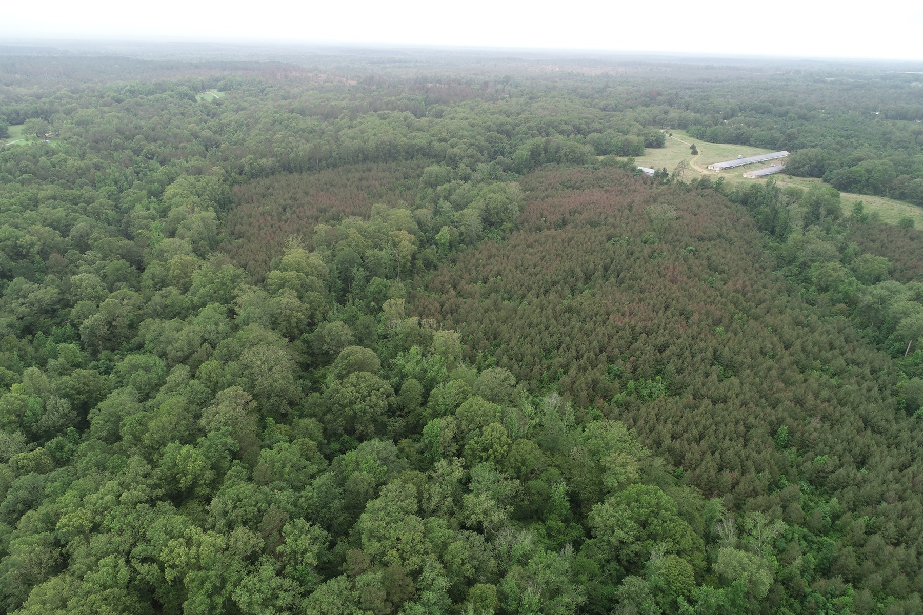 Planted Pine w/ Hdwd Timberland for Sale near Frenchport, AR
