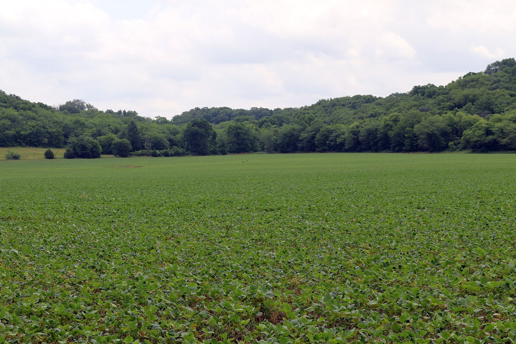 HIGHLY TILLABLE CREEK BOTTOM FARM -- 96 +/- ACRES