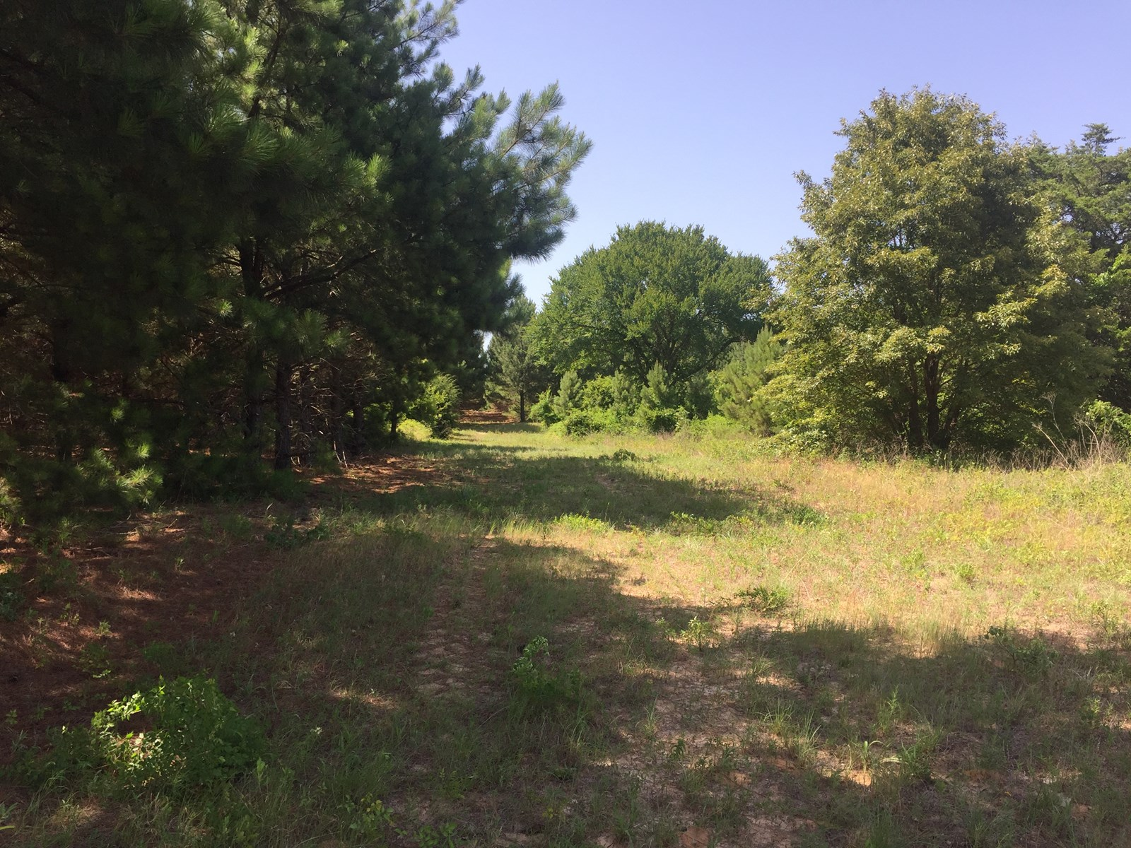 Recreational Timber Land for Sale in Cherokee County Texas