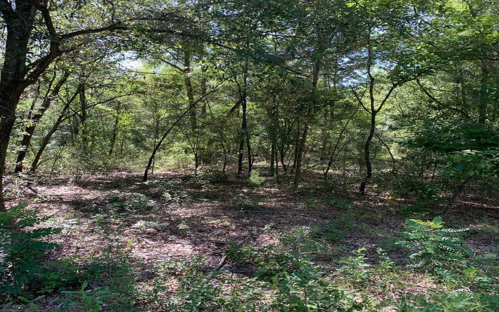 4.02 wooded acres in O'Brien - minimal restrictions