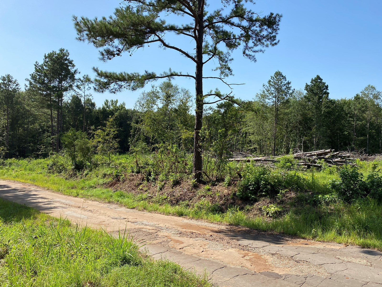 Marion County, Jefferson,TX Land For Sale, Lake O' the Pines