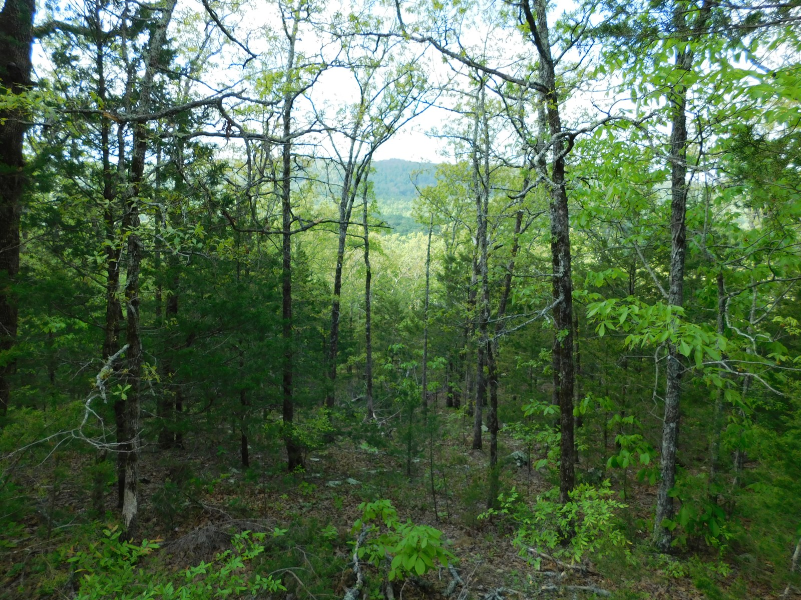 Lot 5 Arkansas Ozark Mountains Newton County Property