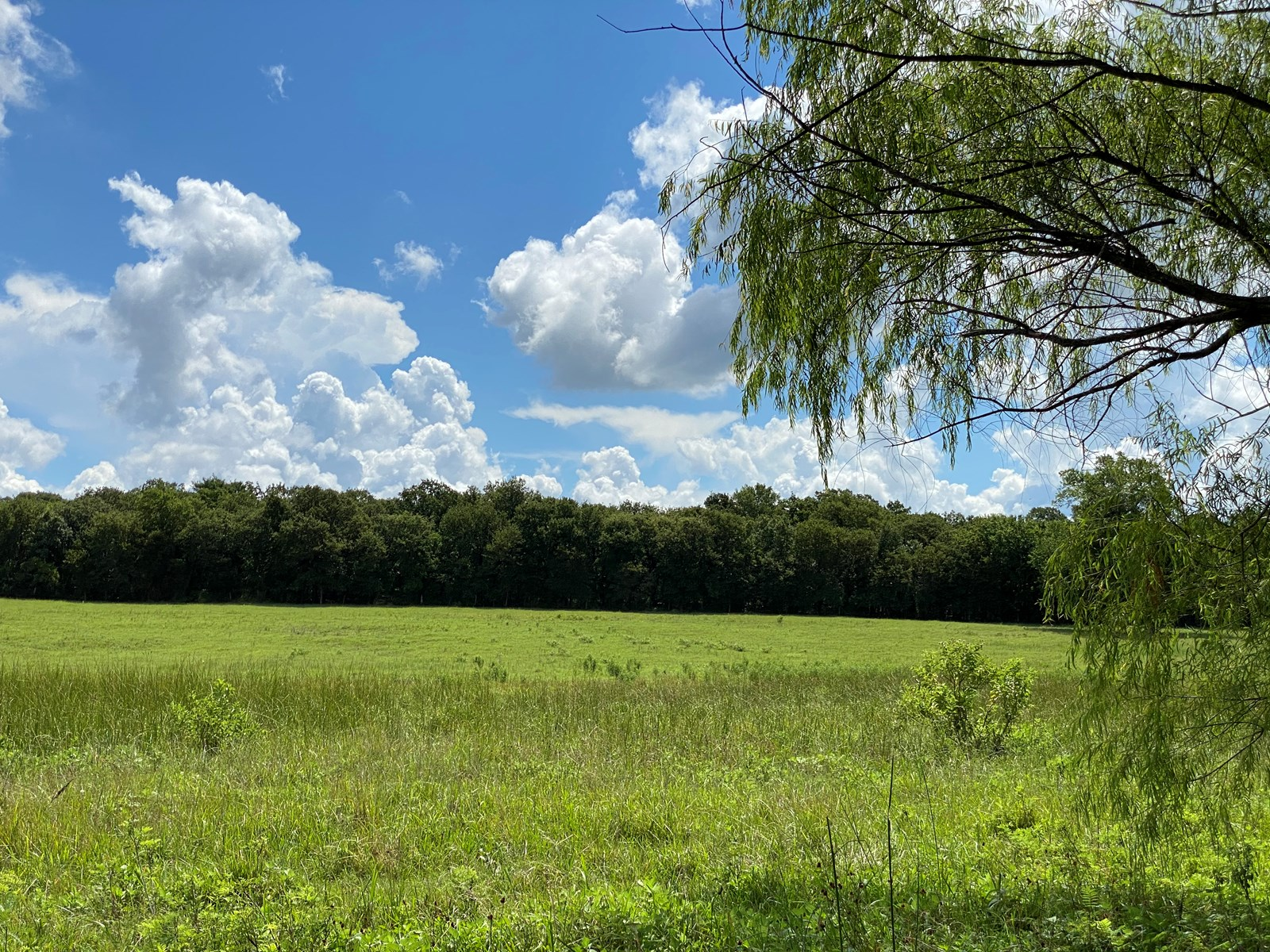 SOUTHERN OKLAHOMA GRAZING LAND/ SUITABLE FOR BUILDING