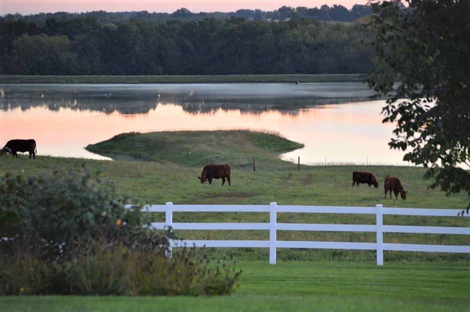 Premium Red Angus Cattle Farm, 578+/- Contiguous Acres