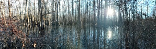 HUNTING LAND IN OUACHITA PARISH LOUISIANA FOR SALE