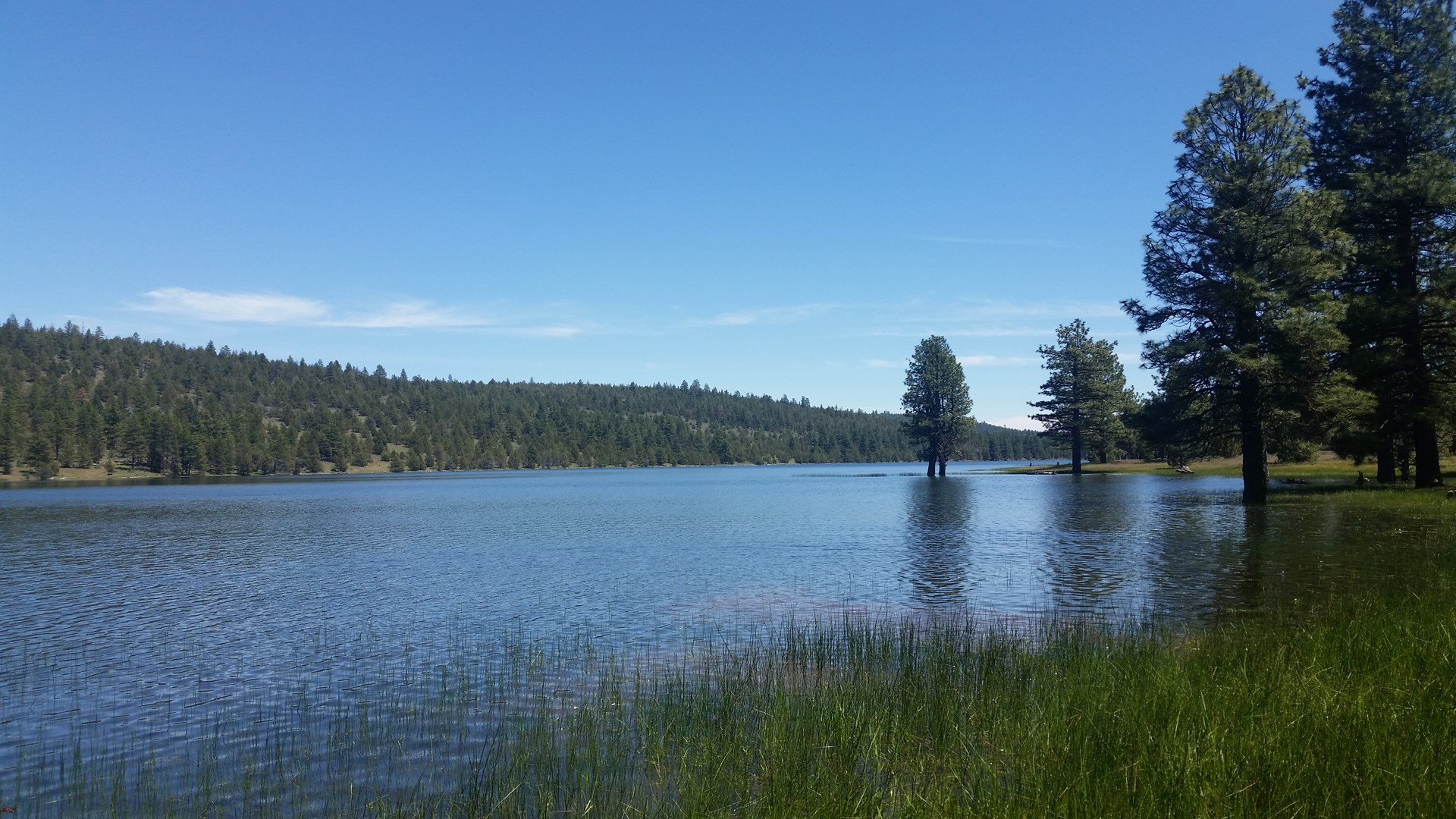 280 +/- Acres/Timber/Views/Wildlife/Northern, CA