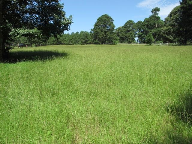 26+ ACRES FOR SALE WITH MOBILE HOME IN EAST TEXAS