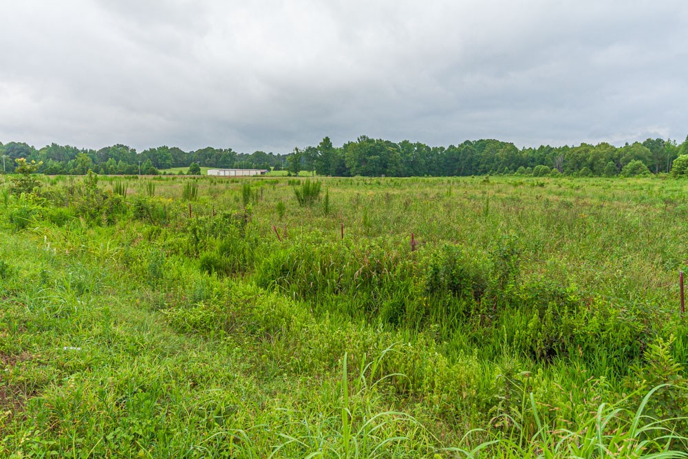 18.5 Acres in McNairy County For Sale