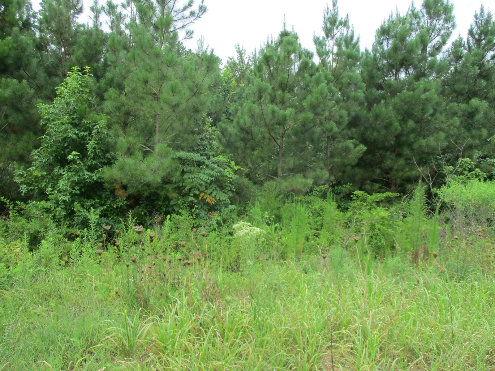 Over Ninety Acres in McNairy County; Great Hunting Tract