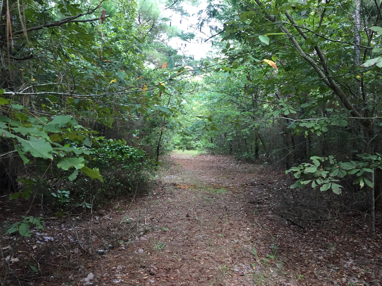 East Texas Land for Sale Avinger, TX 12+- acres