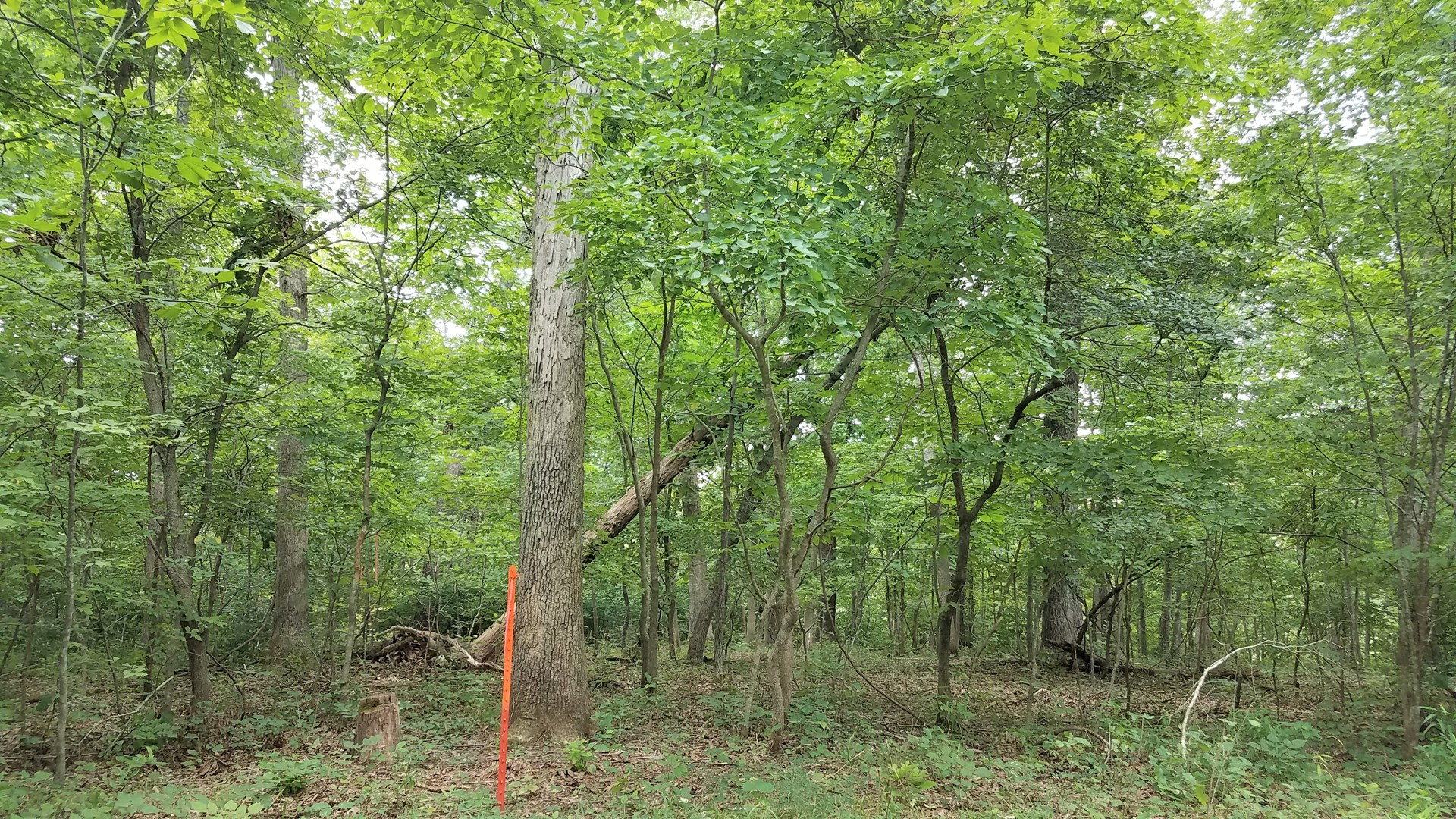 Missouri Land For Sale! 11+/- Acres Vacant Land!