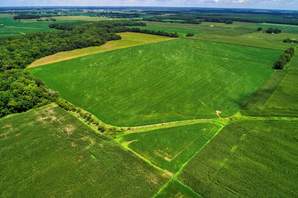 52.49 Acres Farmland, Lawrence County, IL