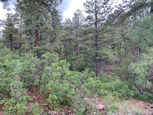 NORTHERN NEW MEXICO LAND FOR SALE