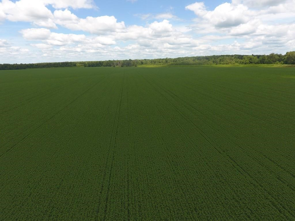 645.5+/- Acres Contiguous Row Crop Bottom, Rare Opportunity