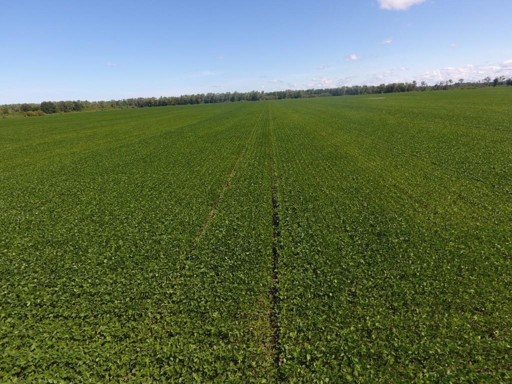 696+/- Acres Row Crop Bottom Farm, Super-sized Opportunity