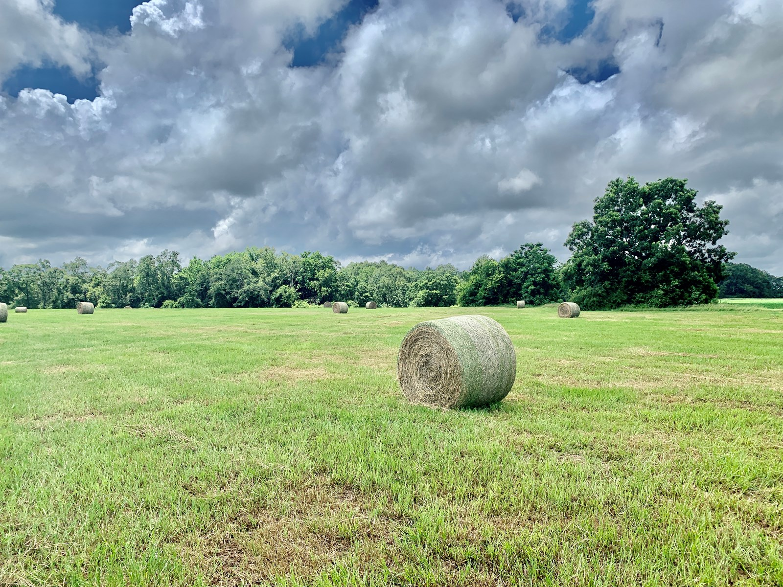 51 Acres for sale Geneva, Alabama