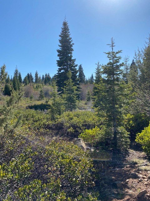 2 Acres for Sale in California Pines!