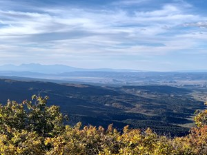 35 ACRE PARCEL ON A WOODED MOUNTAIN IN SOUTHWEST, COLORADO