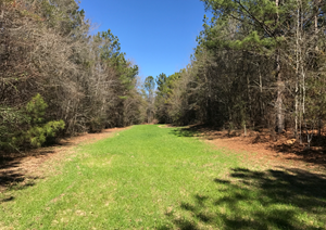 GREAT HUNTING AND TIMBER CLOSE TO AUBURN UNDER $2000/ACRE!!
