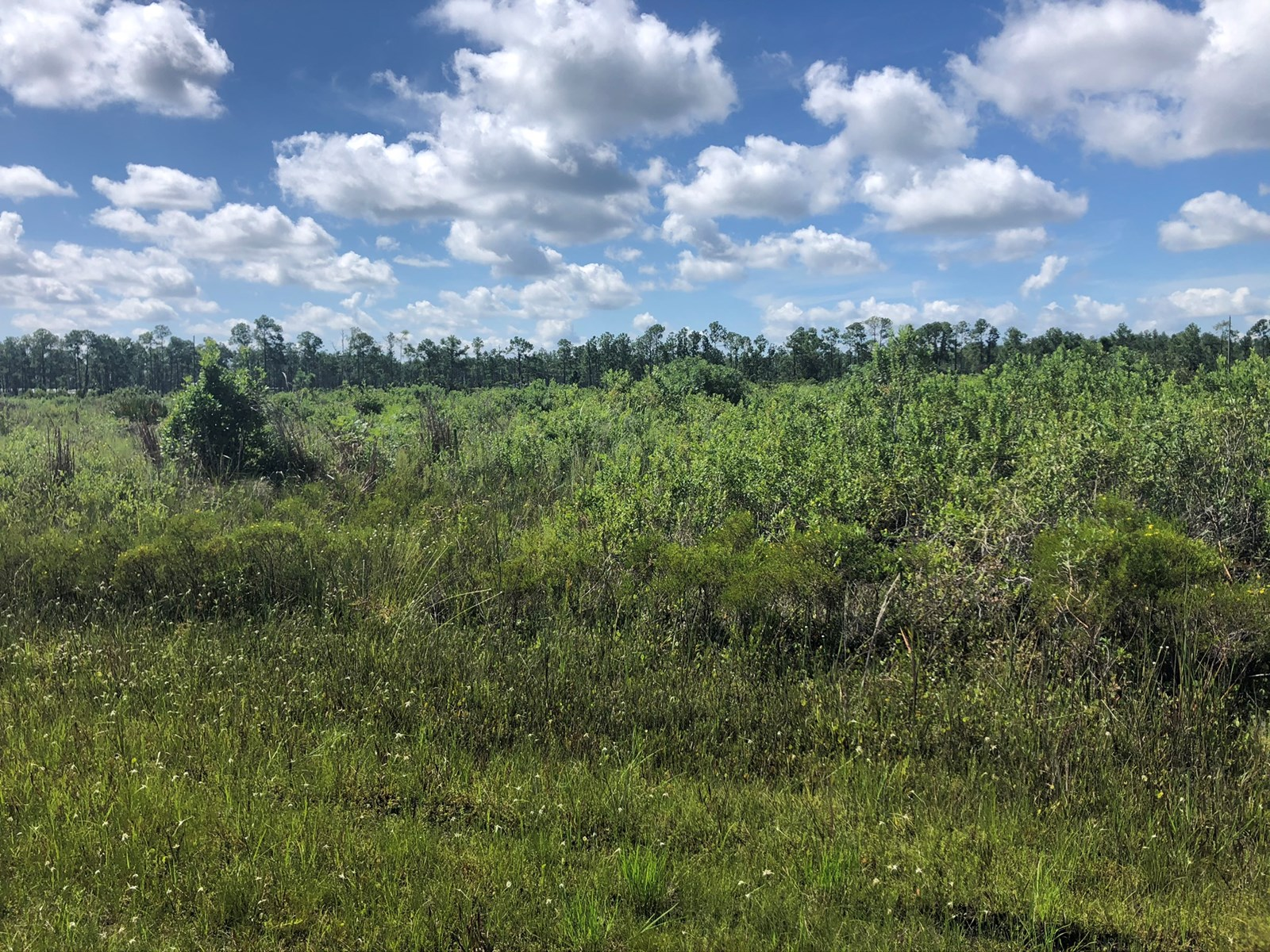 HALF ACRE LOT, BUILD YOUR DREAM HOME, CENTRAL FLORIDA