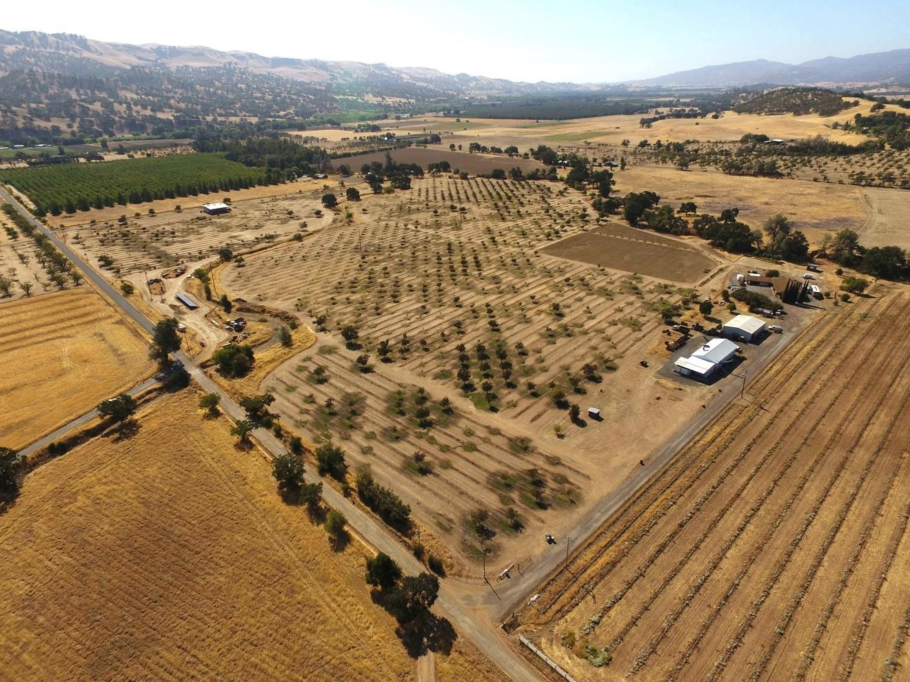 Capay Valley Home, Income Producing Walnut Orchard for Sale