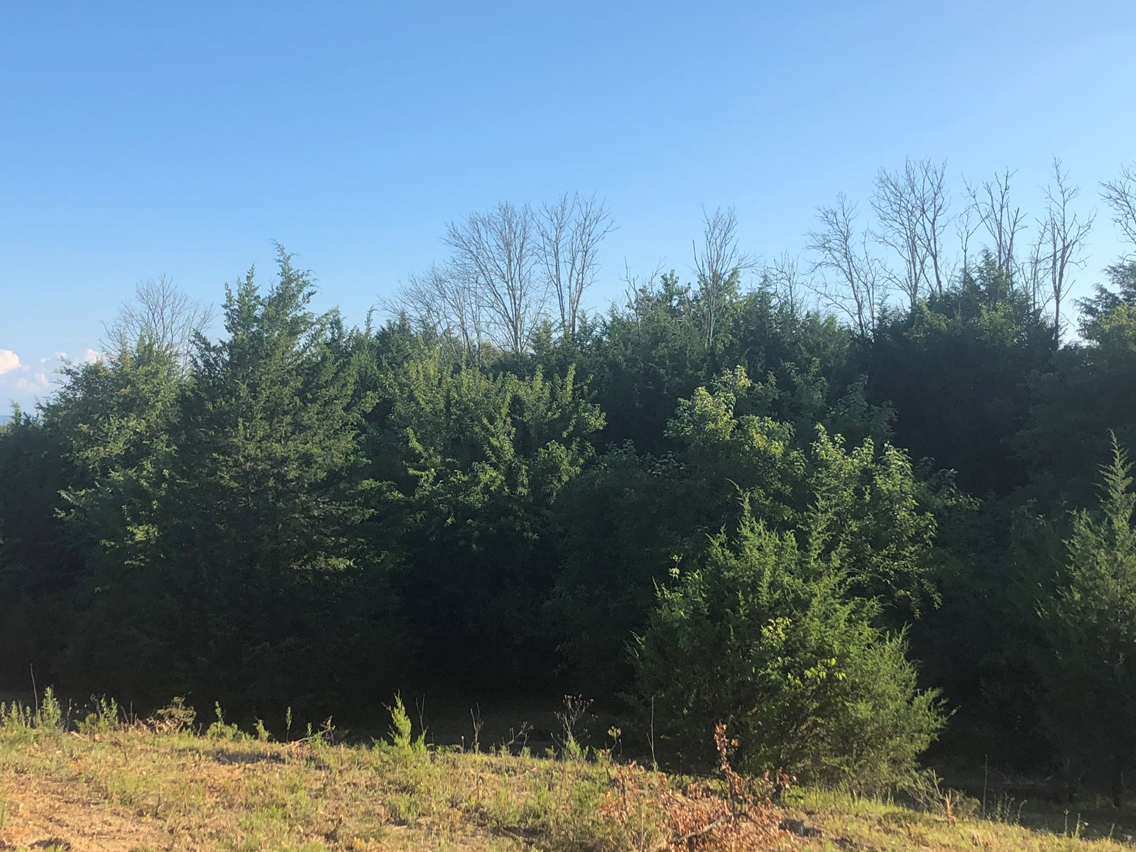 1.62 Acres For Sale in Mohawk, TN