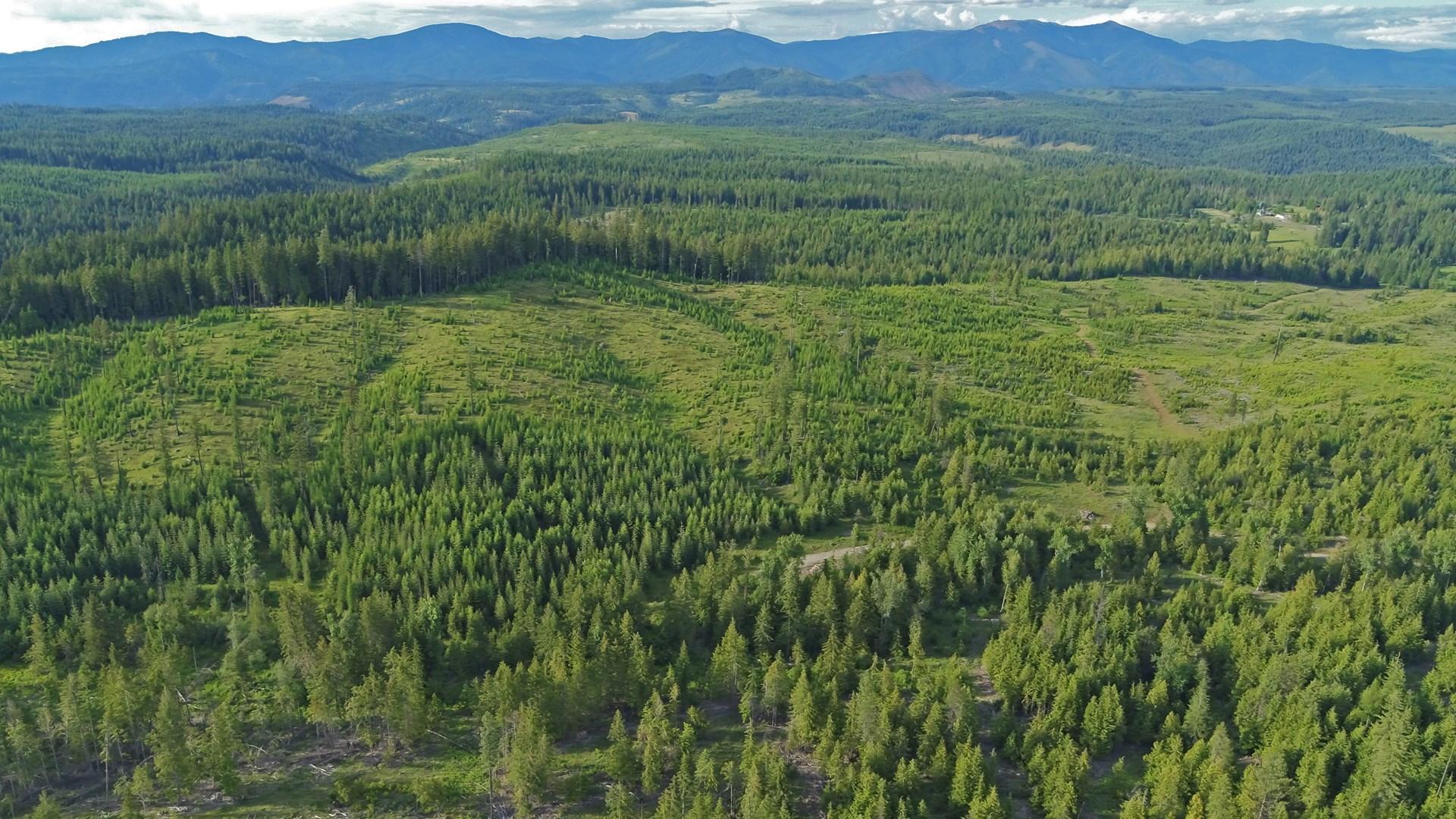 Dream Acreage In St. Maries Idaho
