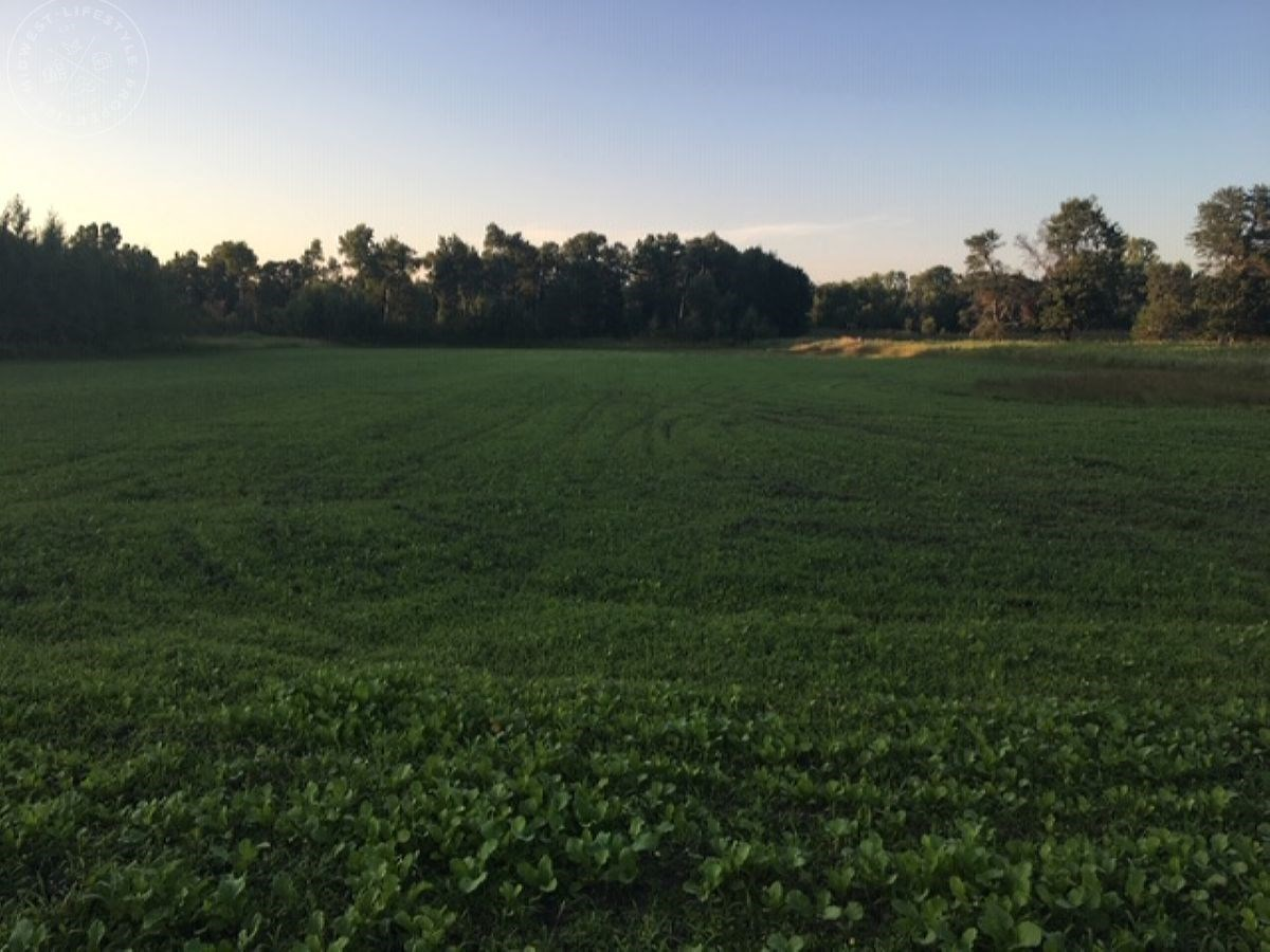 Adams County WI 80 Acre Whitetail Hunting Land