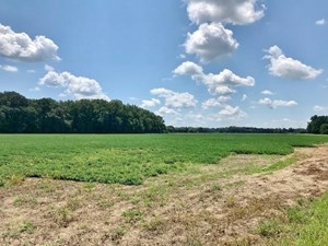 165.5 ACRES MONROE COUNTY, MS MINING PROPERTY FOR SALE