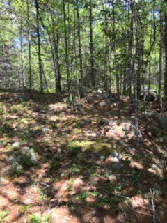 Land for Sale in Woolwich, Maine