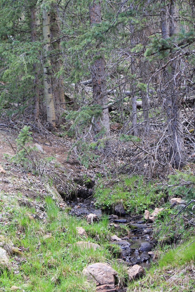 76 Acres Bordering National Forest with Views