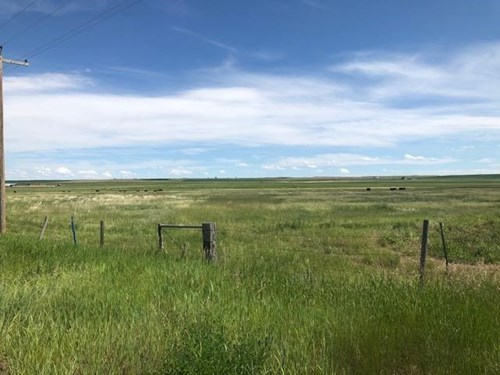 Montana Land For sale near Conrad, MT