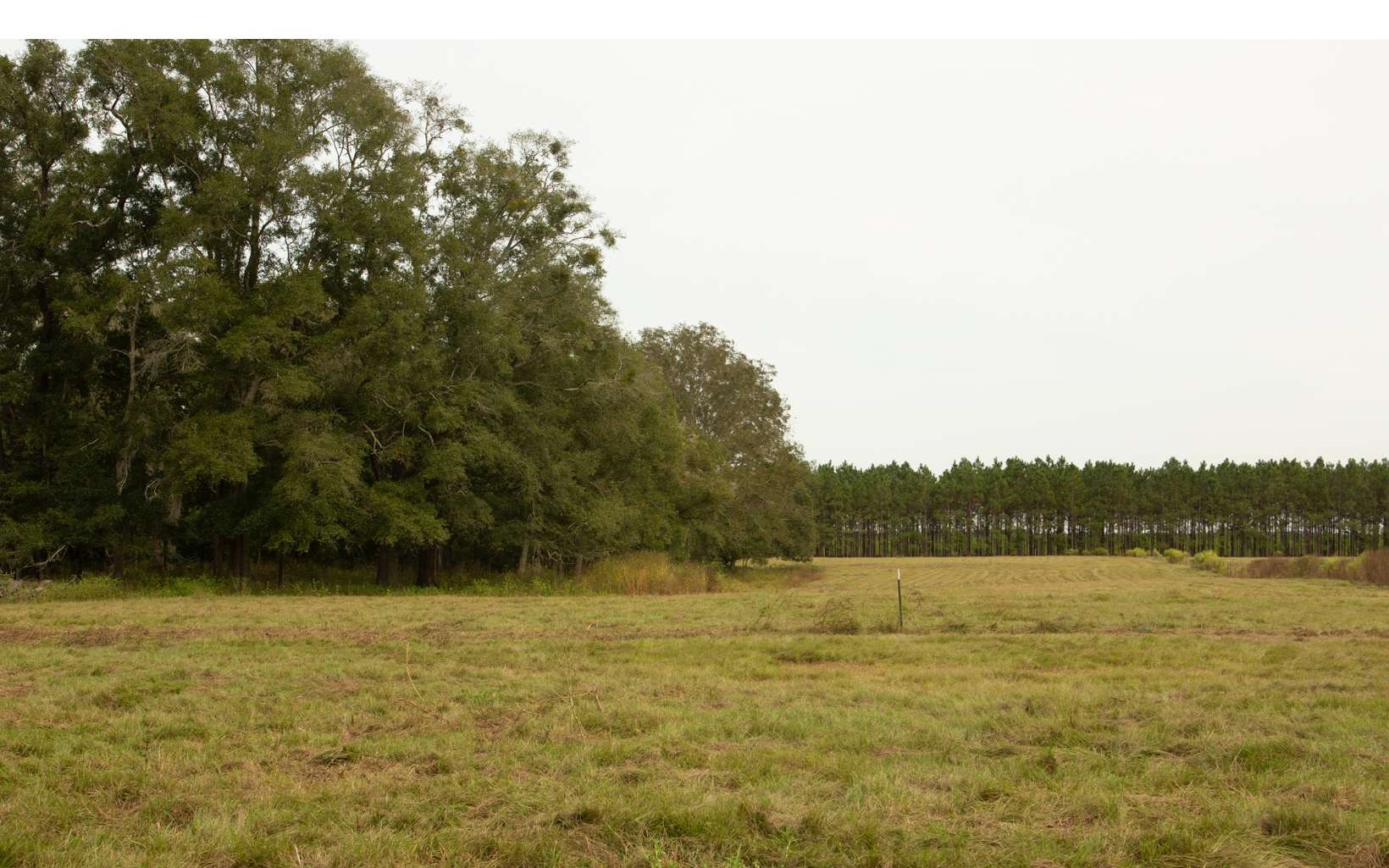 Beautiful 20 Acres Farm Type Land