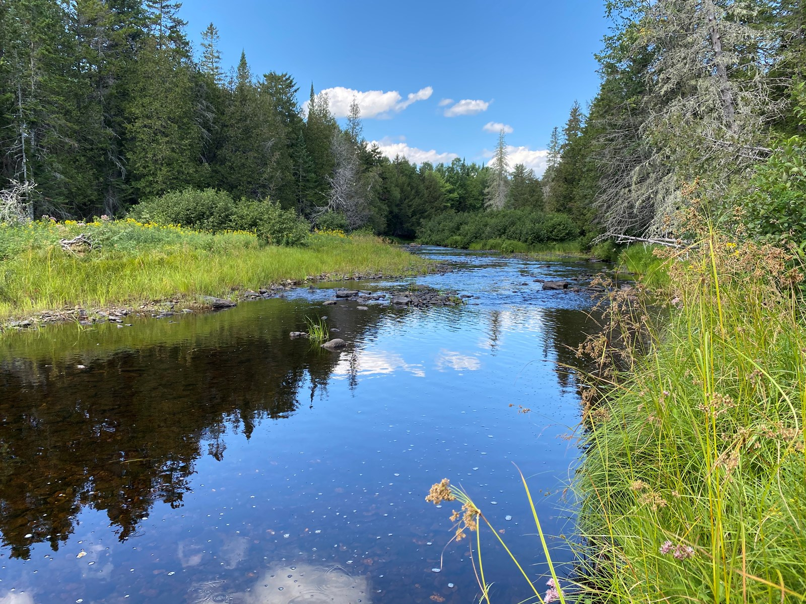 Off Grid Land with Owner Financing For Sale