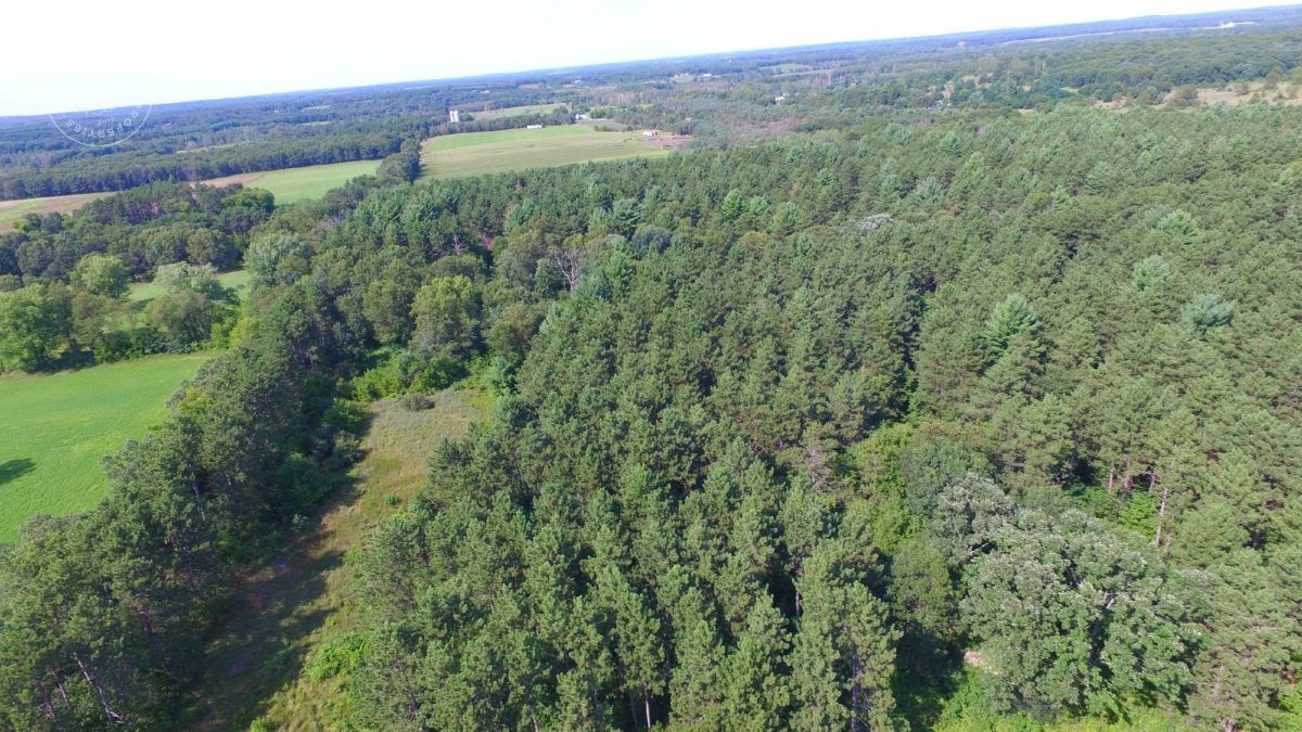 High Quality Hunting Land with Income Potential Portage Coun