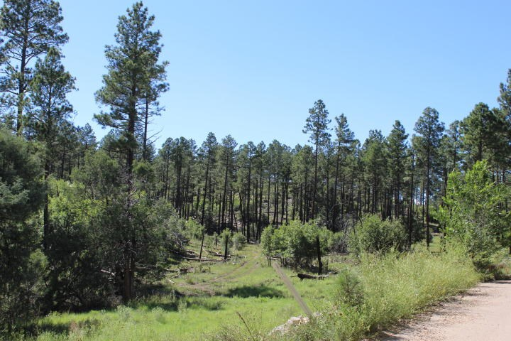 Acreage Bordering Cibola National Forest For Sale!