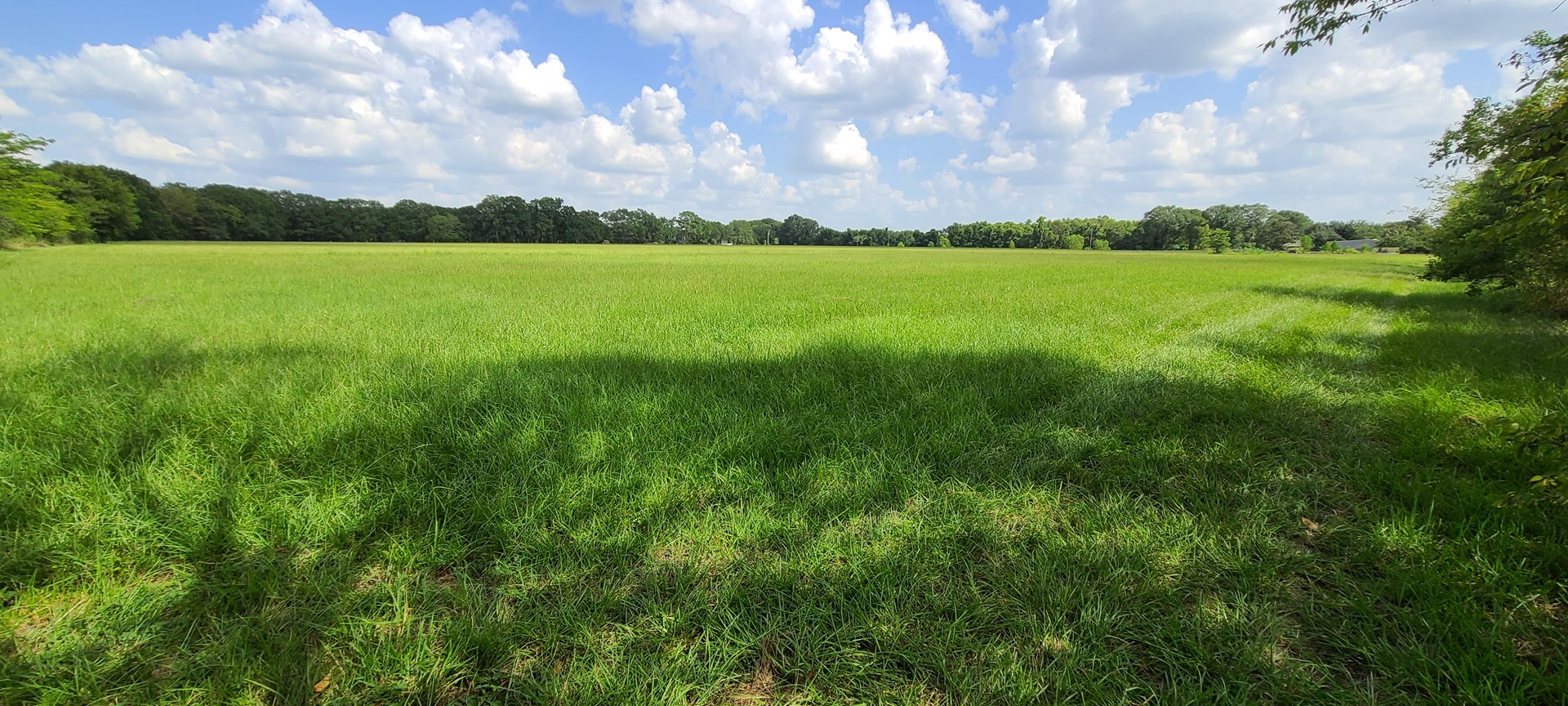 PASTURE LAND ON THE RIVER IN COLUMBIA LA FOR SALE