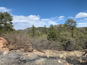 36+ ACRES IN COTOPAXI,CO