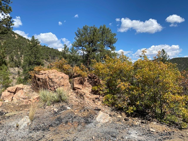 Secluded 36+ Acres in Cotopaxi,Co