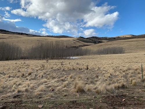 79.80 Acres with Mountain Views