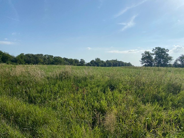 DAVIESS COUNTY MO 80 ACRES FOR SALE
