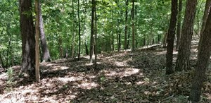 WOODED TRACTS W/ BUILDING SITES FOR SALE IN BEAVER LAKE AREA