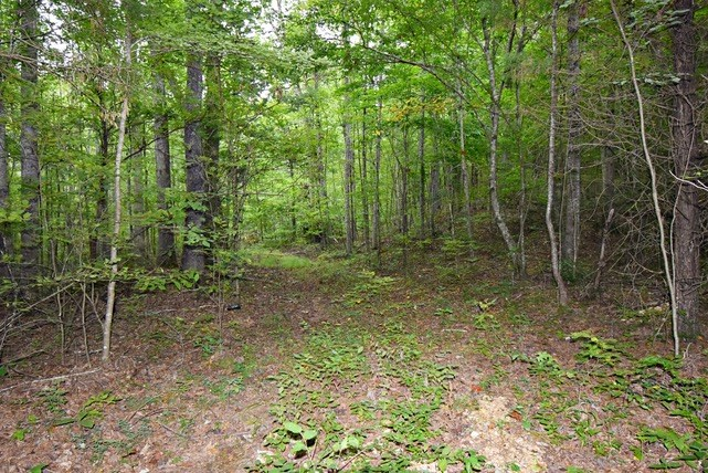 18.5 Wooded Acres w/ Creek Linden, TN $32,000