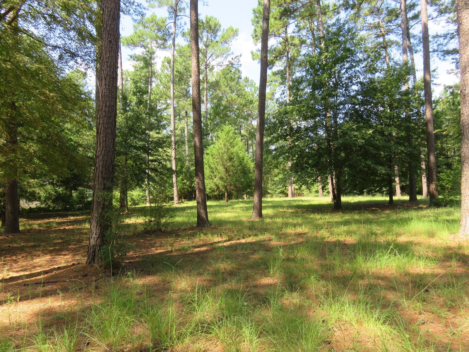30 + Acres in Anderson County With Hunting Cabin For Sale