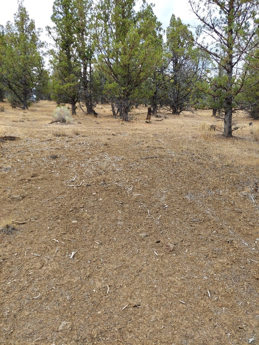 1.5 Acres for Sale in Northeastern CA